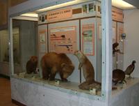 Museo Bravaccini - Grandi estinti